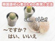 〜ですか?はい、いいえ | 韓国語初心者のための表現と文法