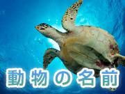 動物の名前単語集【両生類・爬虫類】