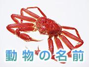 動物の名前単語集【魚貝類】
